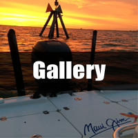 Gallery Fort Myers Fishing Charters